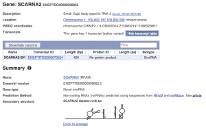 Secondary structure of RNAs
