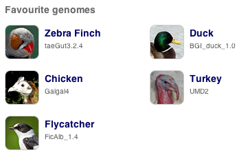 Favourite genomes are zebra finch, duck, chicken, turkey and flycatcher.
