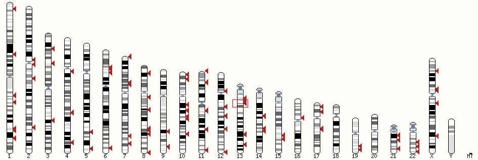 New BLAST Karyotype view