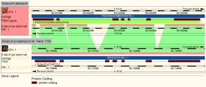 Comparing the genomic region of the Patatin gene in two plant species, potato and tomato.